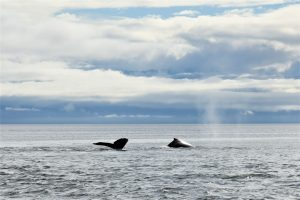Whale tail sighting in Alaska waters