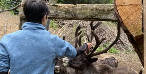 Guest petting the Caribou at a wildlife preserve
