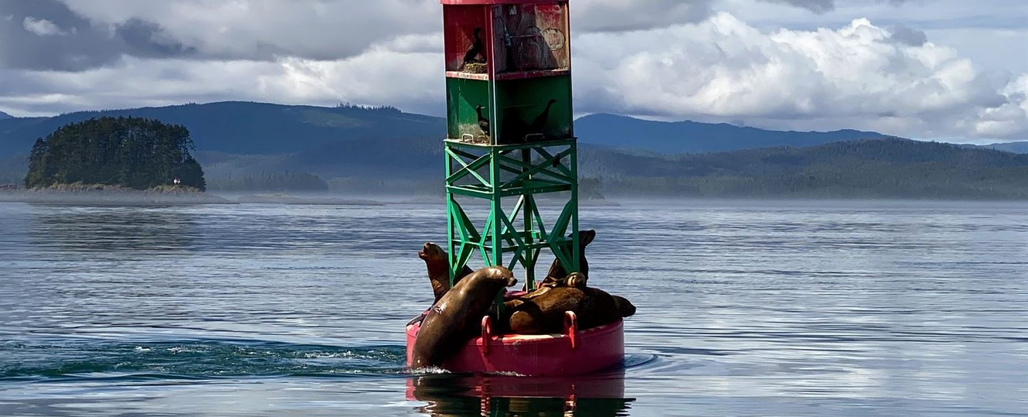 Sea lions and a bird resting on a buoy