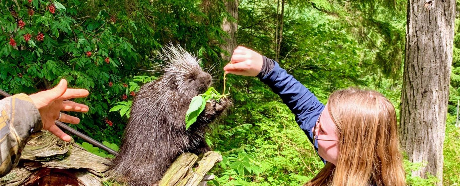 Woman feeding a porcupine some leaves