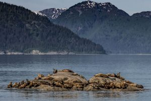 Sea lions taking a break on a small rocky island within sight of shore