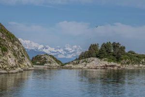 Sea birds flying above the rocky shores of Alaska with forests and snow-capped mountains in the distance