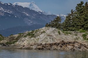 Birds nesting on the rocky shoreline of Alaska with views of rolling forests and mountains to snow-capped peaks in the background