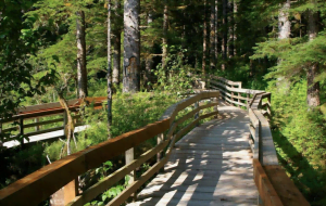 A long wooden pedestrian bridge on a trail in a heavily wooded area