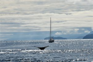 Whale in the ocean with a small fishing boat on the seas by Alaska